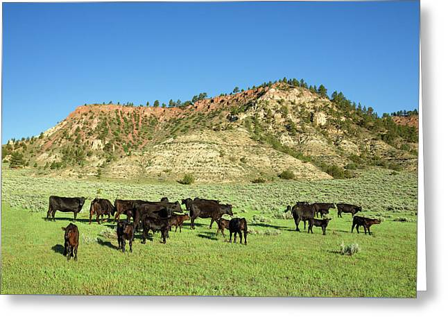 Hilly Pasture Greeting Card