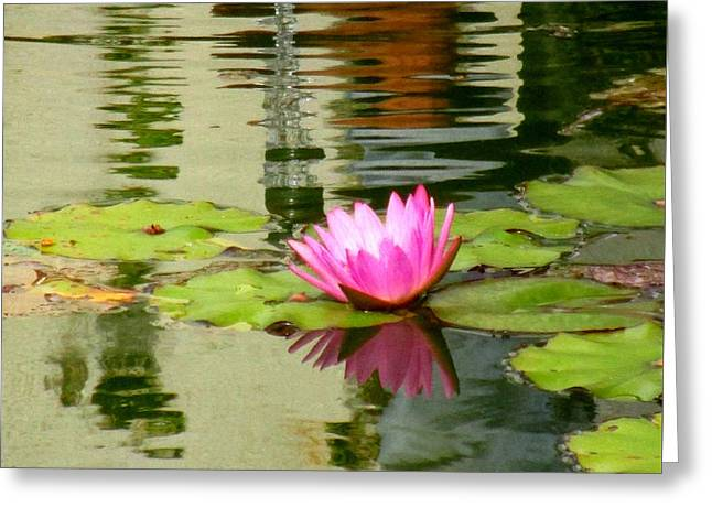 Hilo Water Lily 1 Greeting Card by Randall Weidner