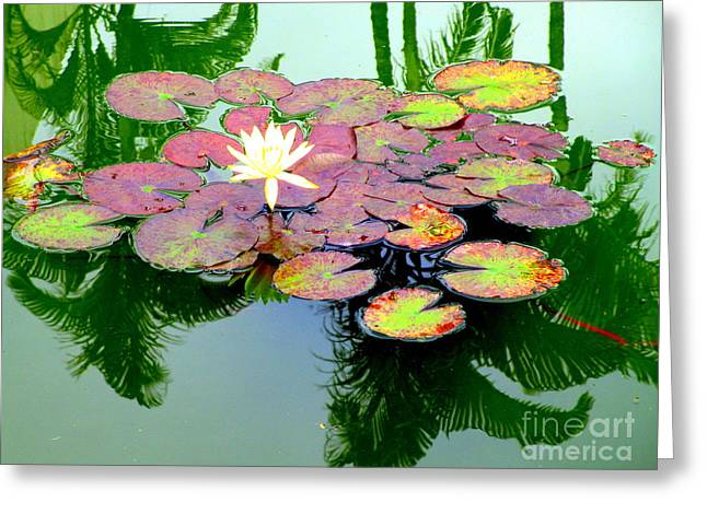 Hilo Water Lily 5 Greeting Card by Randall Weidner