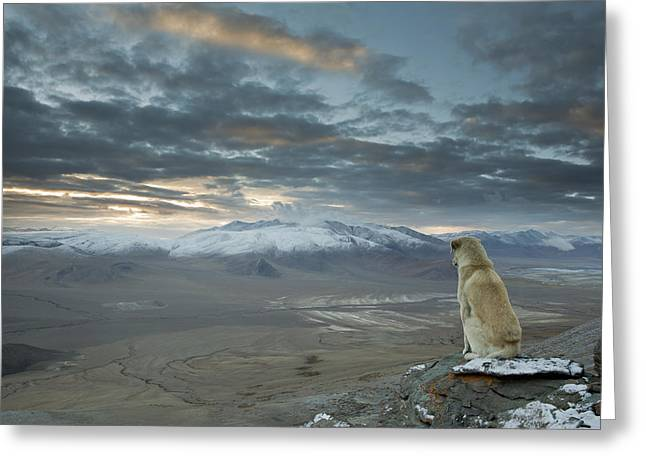 Himalayan Dog Greeting Card by Sebastian Wahlhuetter