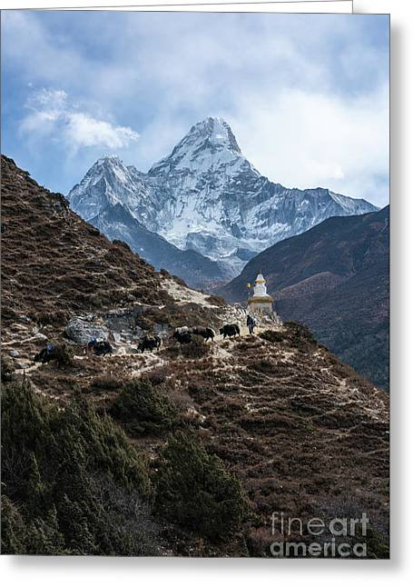 Greeting Card featuring the photograph Himalayan Yak Train by Mike Reid
