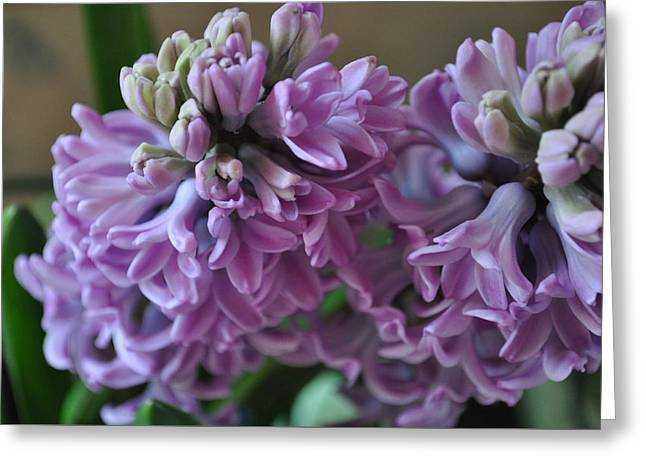 Hint Of Spring Greeting Card by JAMART Photography