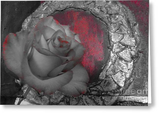 Hints Of Red - Rose Greeting Card