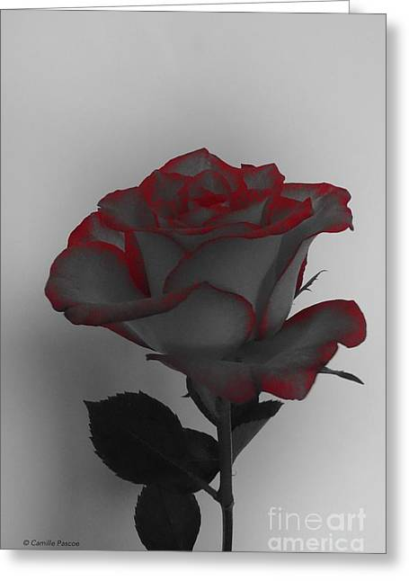 Hints Of Red- Single Rose Greeting Card