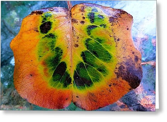 Hippie Leaf Greeting Card