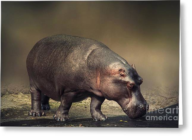 Greeting Card featuring the photograph Hippo by Charuhas Images