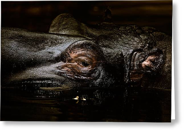 Greeting Card featuring the photograph Hippo by Joerg Lingnau