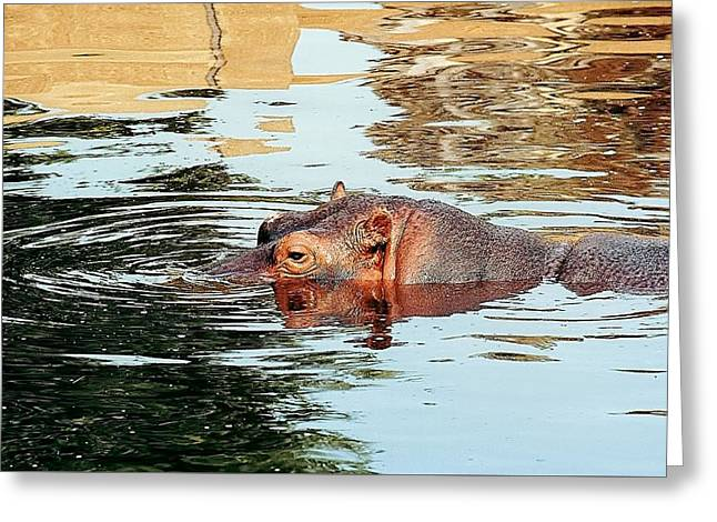 Hippo Scope Greeting Card by Jan Amiss Photography