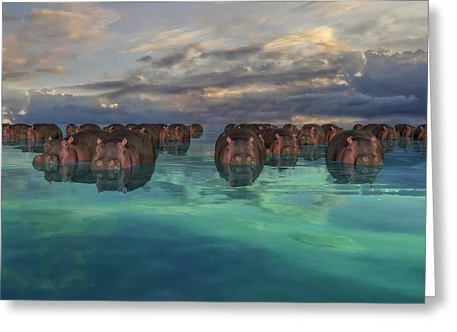 Hippos Greeting Card