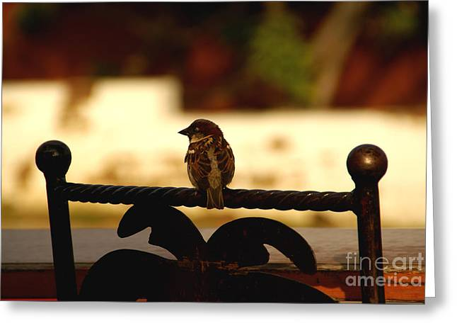 His Eye Is On The Sparrow Greeting Card