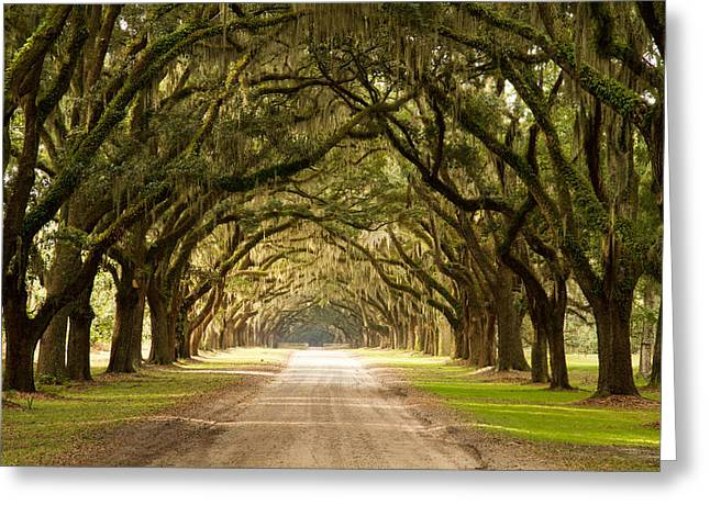 Historic Live Oak Trees Greeting Card