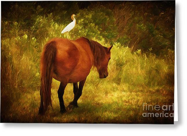 Hitchin A Ride Greeting Card by Lois Bryan