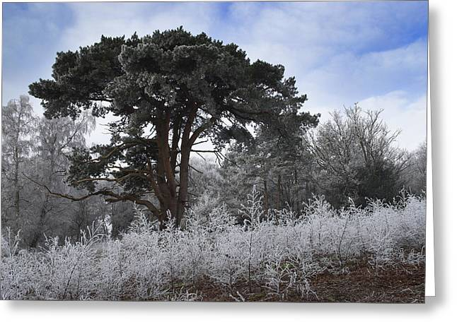 Hoar Frost Greeting Card