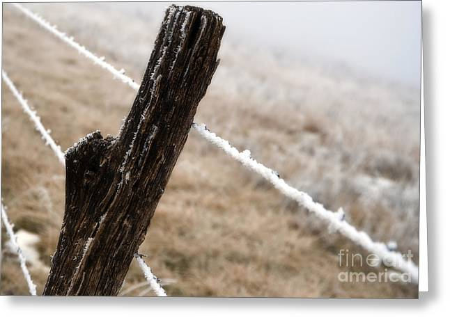 Hoarfrost And Fence Greeting Card by Fred Lassmann