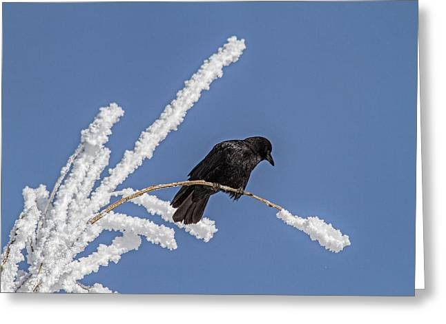 Hoarfrost And The Crow Greeting Card