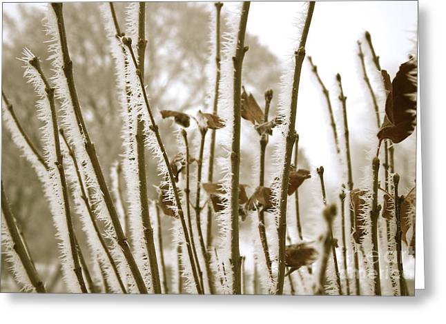 Hoarfrost Branches In Sepia Greeting Card