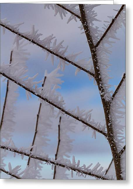 Hoarfrost Hopscotch Greeting Card