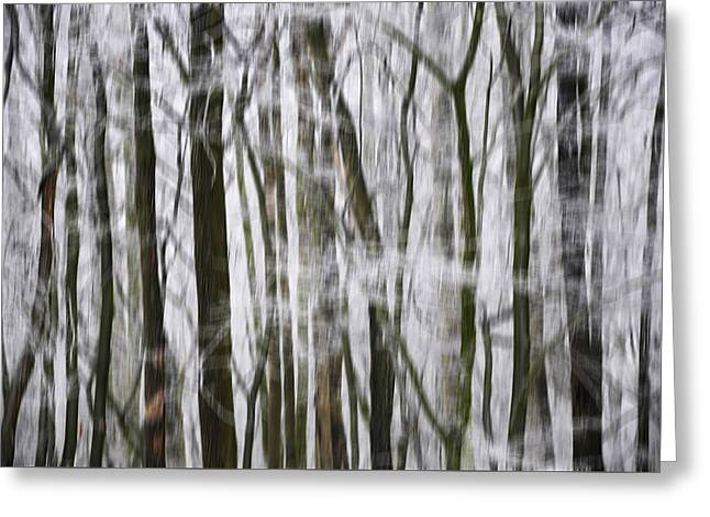 Hoarfrost In Forest  Greeting Card by Claudia Holzfoerster