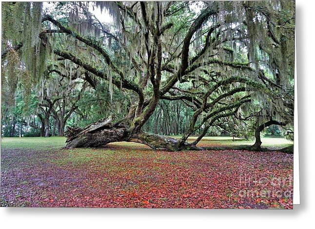 Hofwyl-broadfield Plantation2 Greeting Card