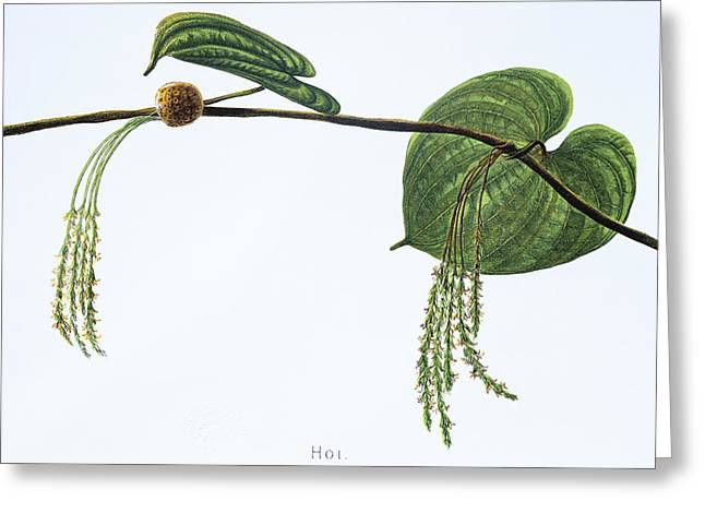 Hoi Greeting Card by Hawaiian Legacy Archive - Printscapes