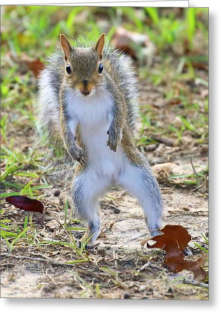 Hokey Pokey Squirrel Greeting Card by Pat Williams