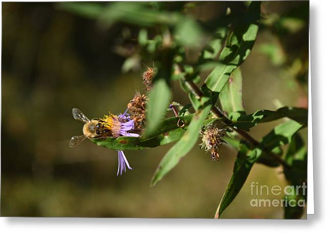 Holding On To Summer Greeting Card by Rowena Throckmorton