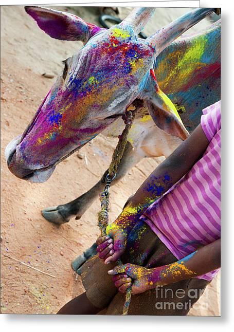 Holi Cow Greeting Card