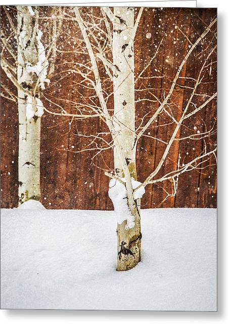 Holiday Aspens Greeting Card