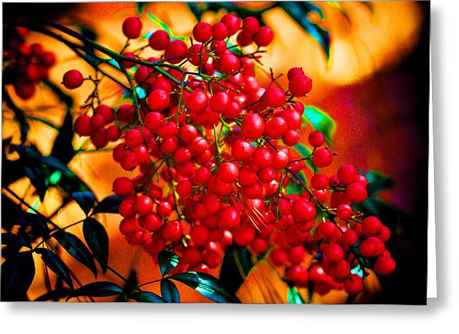 Holiday Berries Greeting Card by Russ Mullen