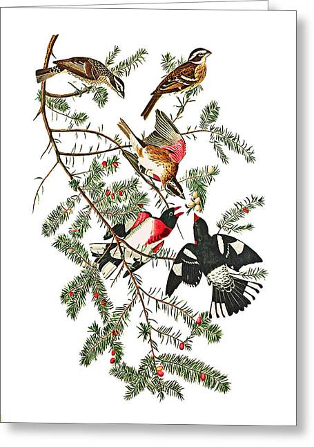 Greeting Card featuring the photograph Holiday Birds by Munir Alawi