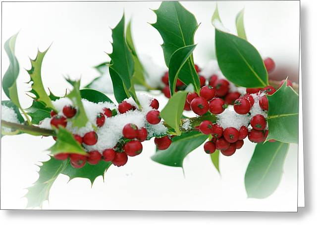 Greeting Card featuring the photograph Holly Berries On White by Sharon Talson