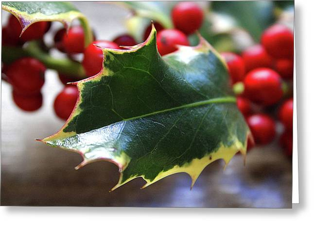 Holly Berries- Photograph By Linda Woods Greeting Card by Linda Woods