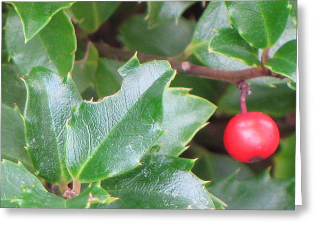 Holly Berry Greeting Card by Sylvia Wanty