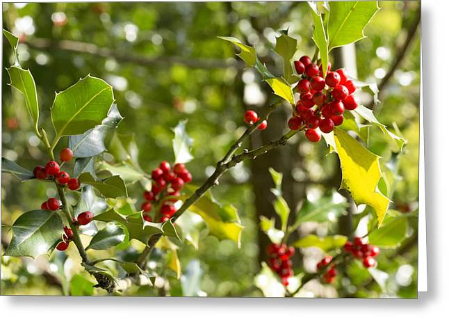 Holly With Berries Greeting Card by Chevy Fleet