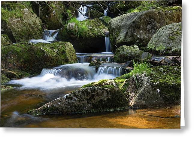 Holtemme, Harz Greeting Card