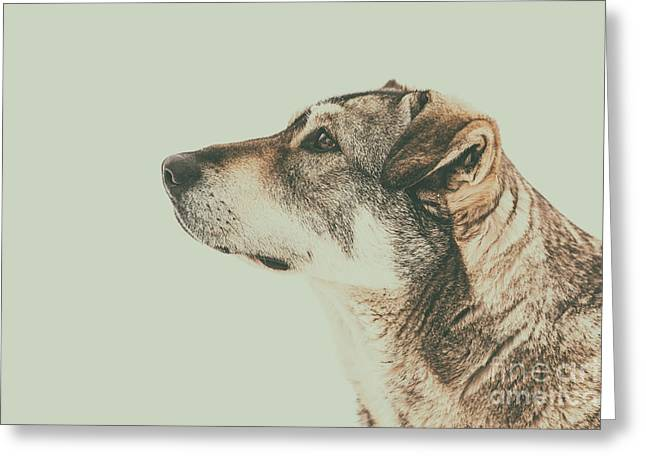 Homeless Dog Looking Up Portrait Greeting Card by Radu Bercan