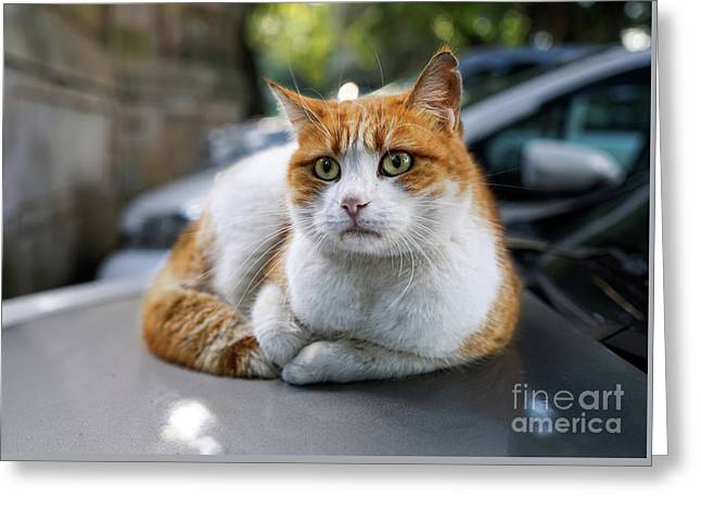 Homeless Red Cat Greeting Card