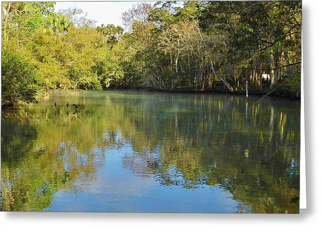 Homosassa River Greeting Card