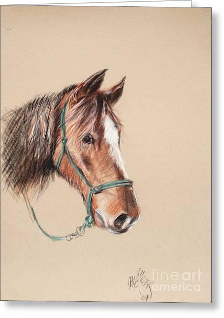 Honcho At The Morgan Horse Ranch Prns Greeting Card by Paul Miller