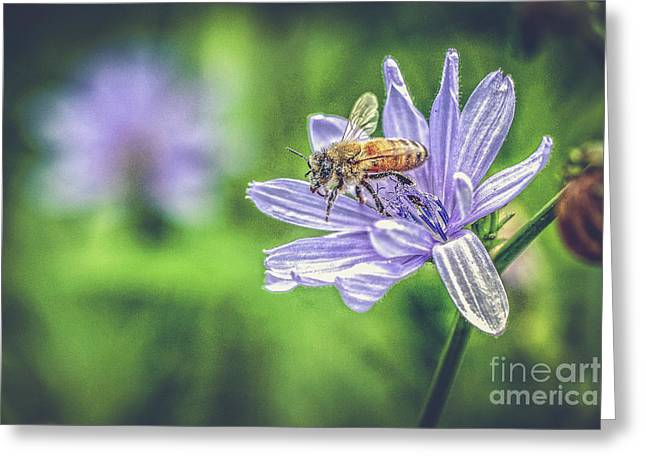 Honey Bee And Flower Greeting Card