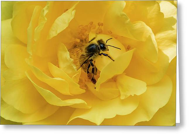 Greeting Card featuring the photograph Honey Bee by Mark Mille
