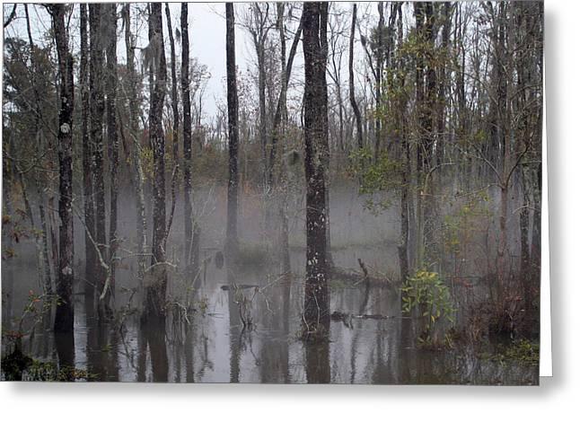 Honey Island Swamp Greeting Card by Benny Dupre