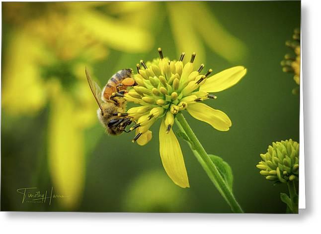 Honeybee 21 Greeting Card