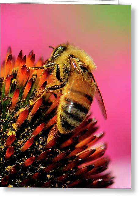 Gathering Greeting Cards - Honeybee Greeting Card by Betty LaRue