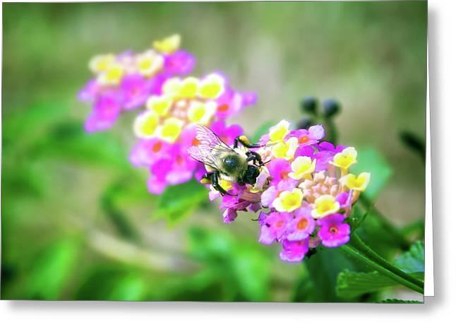 Honeybee Garden Greeting Card