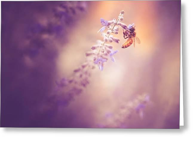 Honeybee On Lavender Greeting Card