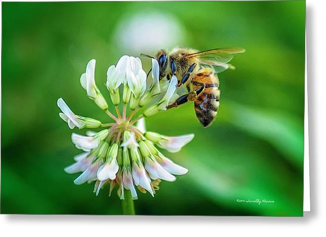 Honeybee On White Clover..... Greeting Card