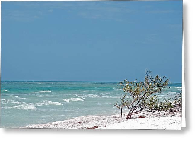 Honeymoon Island Shores Greeting Card by Peter  McIntosh