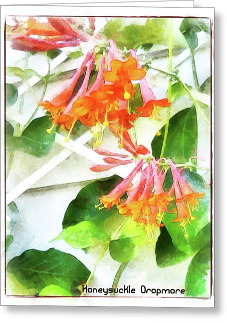 Honeysuckle - Dropmore Scarlet Greeting Card