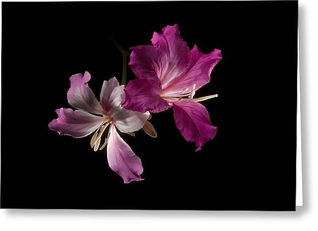 Greeting Card featuring the photograph Hong Kong Orchid 4 by Lou  Novick